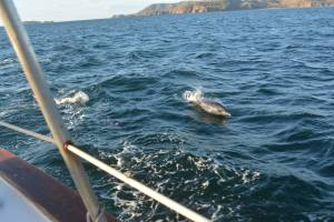 dolphins and sailing in Costa Rica